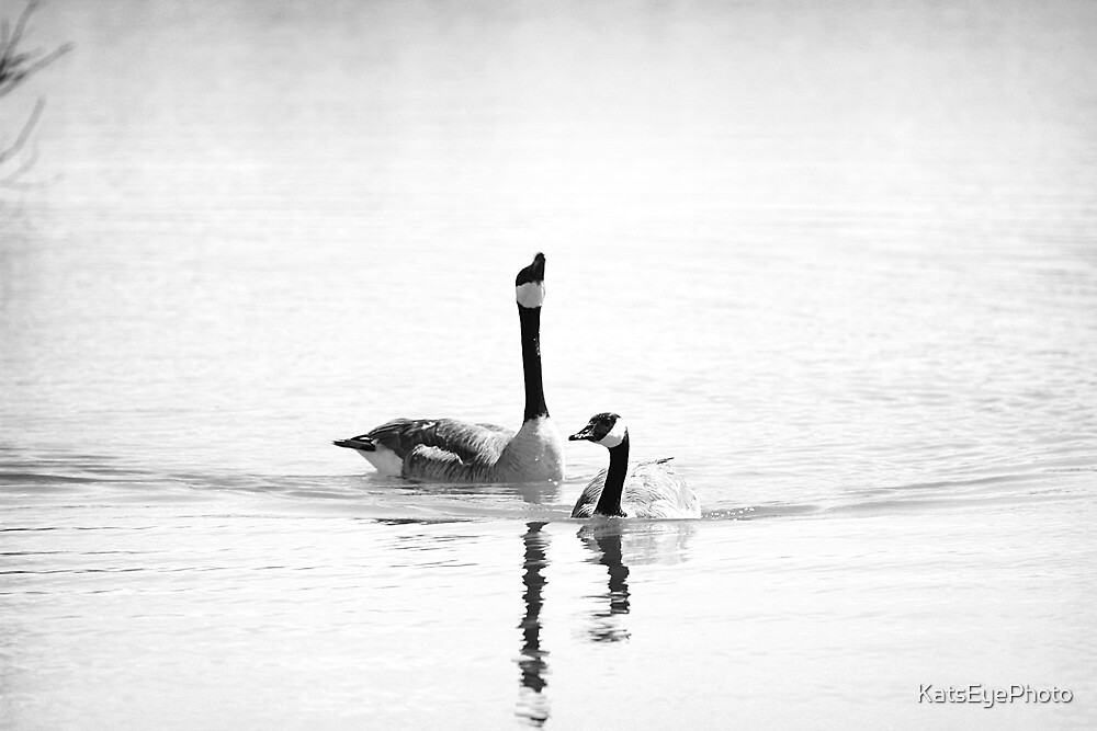 Just Geese by KatsEyePhoto