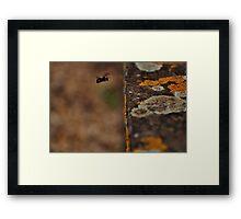 I Lichen Black and White Bees... Framed Print