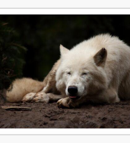 Happy Arctic Wolf Sticker