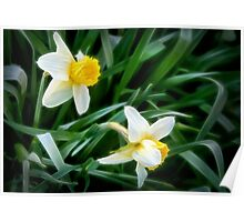Daffodils on an April Day Poster
