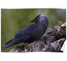 The Jackdaw Again  Poster