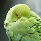 Hey I'mTrying To Catch Some Zzzzzz! - Ringneck Parrot - NZ by AndreaEL