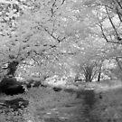 Woodland Path - Infrared by Ann Garrett