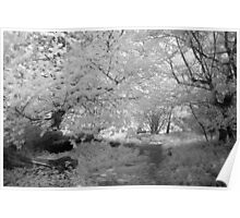 Woodland Path - Infrared Poster