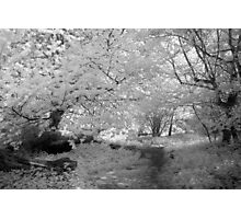Woodland Path - Infrared Photographic Print