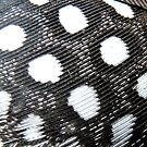 What is it? SOLVED by Jason Weigner Guineafowl feather by MaeBelle