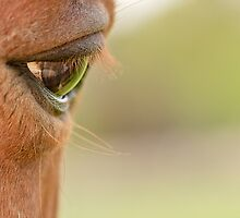 Horse Eye by Peter Davies