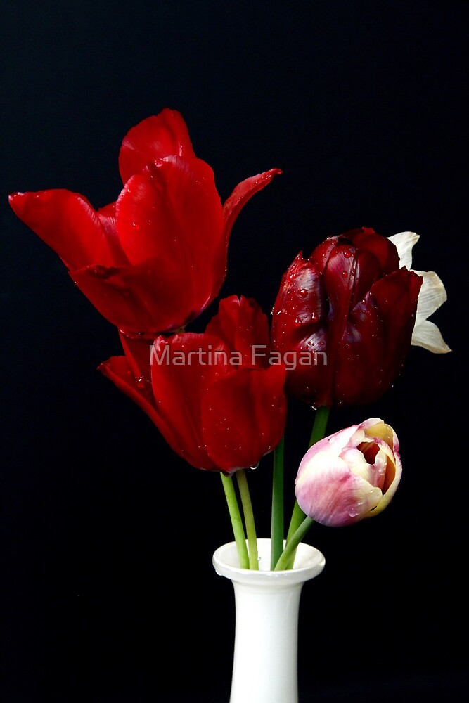 Tulip Still Life by Martina Fagan