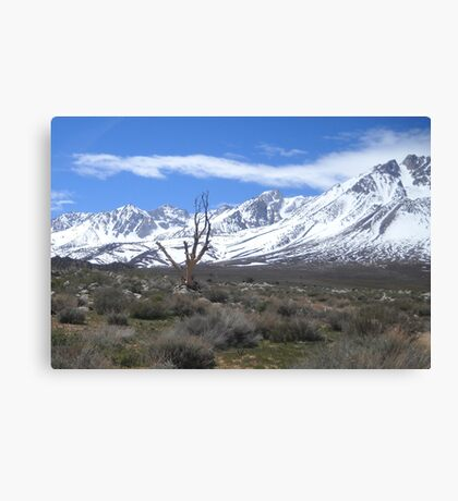 Stark Reality of Mother Nature Canvas Print
