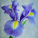 Pretty Blue  by OpalFire
