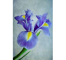 Pretty Blue  Photographic Print