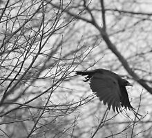 Crow in Monochrome by Mully410