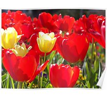 Red and Yellow Flowers Poster