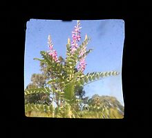 TTV Image ( Through The Viewfinder)#6 by delta58