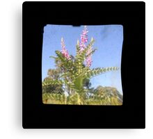 TTV Image ( Through The Viewfinder)#6 Canvas Print