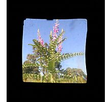 TTV Image ( Through The Viewfinder)#6 Photographic Print