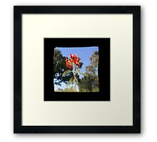 TTV Image ( Through The Viewfinder)#7 Framed Print