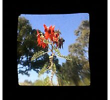TTV Image ( Through The Viewfinder)#7 Photographic Print