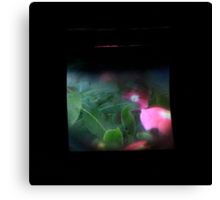 TTV Image ( Through The Viewfinder)#9 Canvas Print