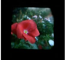 TTV Image ( Through The Viewfinder)#10 Photographic Print