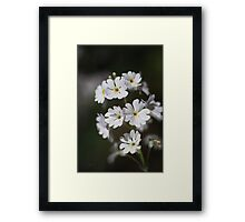 Blushing Yellow Of Small White Flowers Framed Print