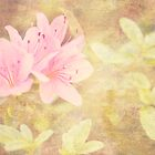 Pink Azaleas Dreamy Greeting Card by Susan Gottberg