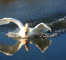 Splash Landing by Melissa Ann Blair