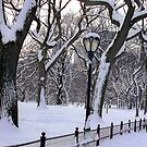 Snowy Central Park  by Alberto  DeJesus