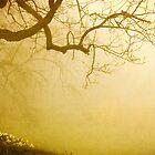 Majestic Meadow by jenndiguglielmo