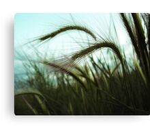 Grass Blowing in the Wind Canvas Print