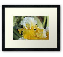 Montana de Oro Iris Framed Print