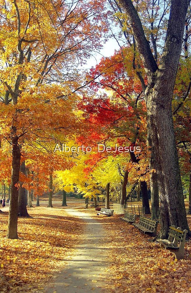 Autumn foliage in Central Park  by Alberto  DeJesus