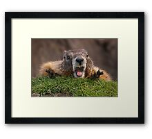 Marmot Surprise Framed Print