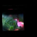 TTV Image ( Through The Viewfinder)# 6 Cards by delta58