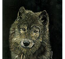 Wolf Portrait Photographic Print