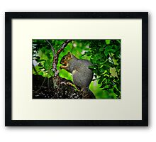 Under the Canopy Framed Print