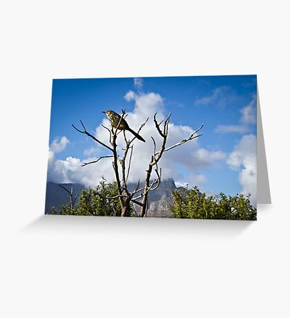 { in the clouds } Greeting Card