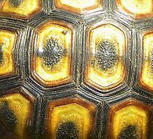 Angulate Tortoise Shell by Pieta Pieterse