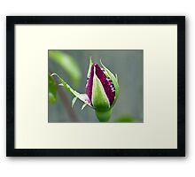 Canon 55 to 250 lens Review Framed Print
