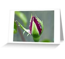Canon 55 to 250 lens Review Greeting Card