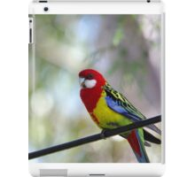 Bird on the wire - the beautiful Rosella  iPad Case/Skin