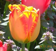 Organge and Yellow Tulup by steeltrap