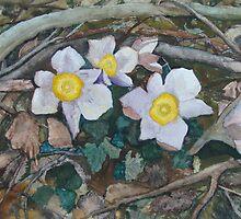 Anemone Vernalis Season changing by Aki Mononen
