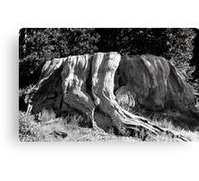 Mark Twain Stump Canvas Print