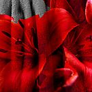 The Flower and the Towel by Andrew (ark photograhy art)