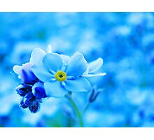 Blue World - Forget-me-not Photographic Print