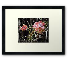Cannon Ball tree Framed Print