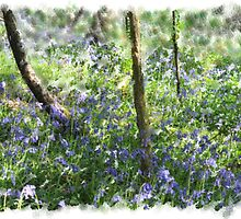 Bluebell Wood by cherryannette