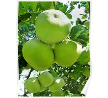 pomelo fruit tree Poster