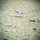 Seagull by wyvernsrose